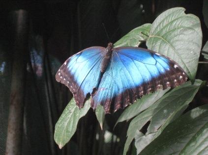 Costa Rica 081