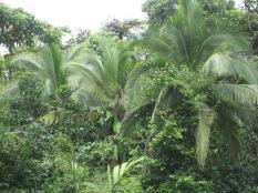 Costa Rica 143