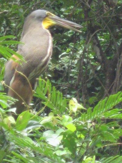 Costa Rica 163