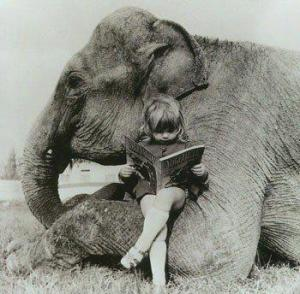 elephant read