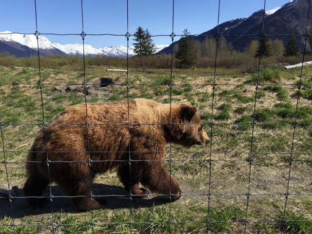 Alaska 2015 222