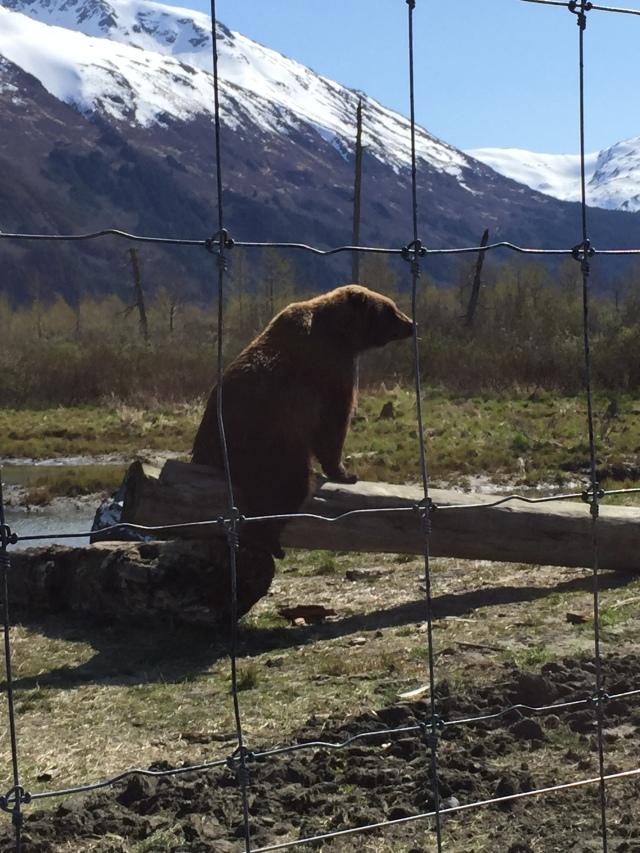 Alaska 2015 224
