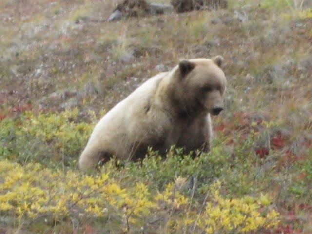 Alaska 417